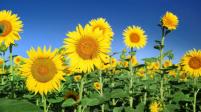 8月度の花